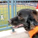 dog game-ball game