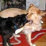 brawl!